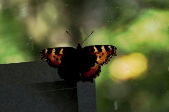 2014.08.19.ButterflyR001