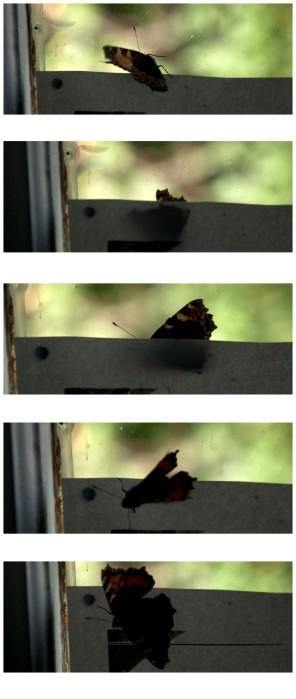 2014.08.19.ButterflyR002