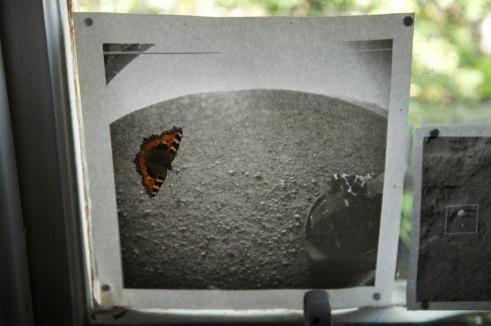 2014.08.19.ButterflyR004