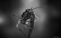 Creature Concept   Garden Bug
