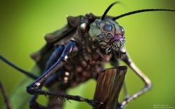Creature Concept | Garden Bug