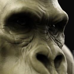 Gorilla Bust